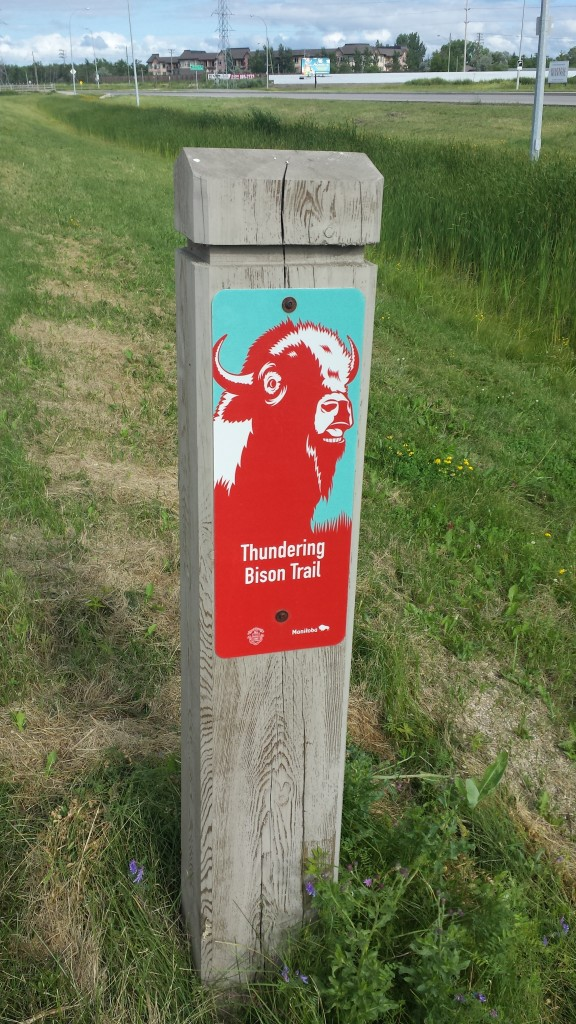 Thundering Bison Trail